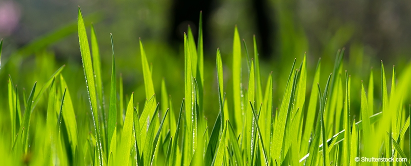 Grass Height Impacts Liability